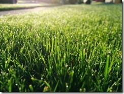 Dewy grass sm